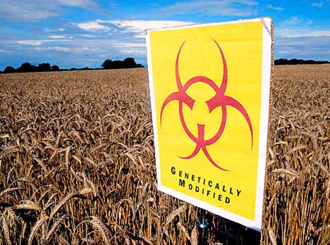 Europe-must-change-policy-on-GM-crops-warn-experts